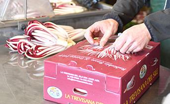 Chiusura scatola alla fine del confezionamento del Radicchio di Treviso