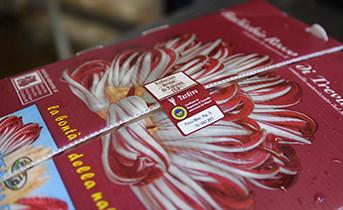 Confezione Radicchio Rosso - La Trevisana del Sile
