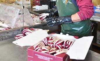 Confezionamento manuale del Radicchio Rosso di Treviso IGP