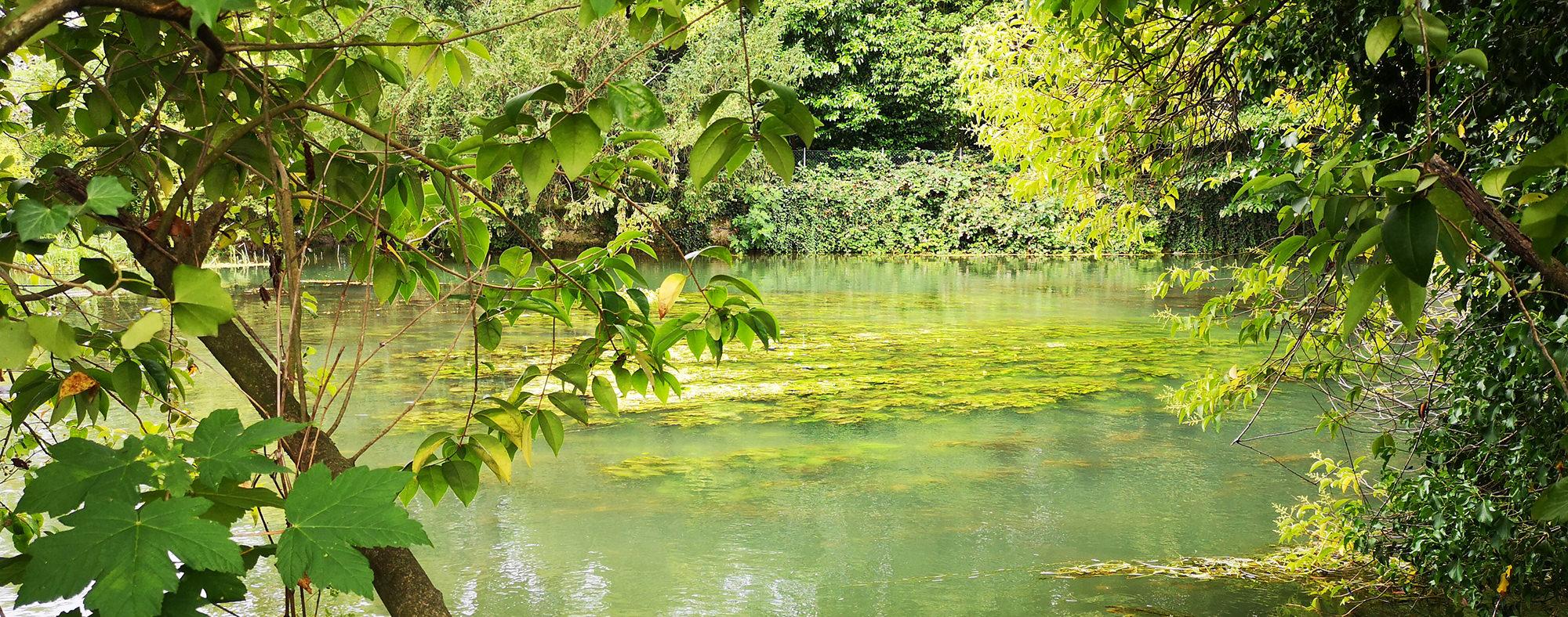 Radicchio di Treviso IGP nell'area del Parco del Sile